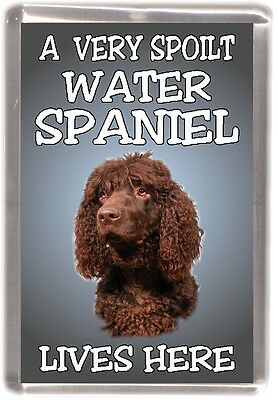 "Irish Water Spaniel Dog Fridge Magnet  ""A VERY SPOILT WATER SPANIEL LIVES HERE"""