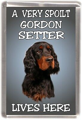 "Gordon Setter Dog Fridge Magnet  ""A VERY SPOILT ....LIVES HERE "" by Starprint"