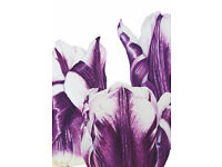Botanical Art Class suitable for all levels of ability new term w/c 24th April