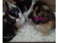Beautiful kitten nAmed Ruby