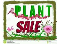 PLANT AND TABLE TOP SALE. 1ST MAY BANKHOLIDAY MONDAY