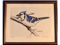Limited Edition Print - Blue Jay by Peter Spuzak No. 166/500 Width 12.5in/32cm Height 10in/27cm
