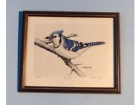 Limited Edition Print - Blue Jay by Peter Spuzak No. 166/500 W12.5in/32cmH10in/27cm
