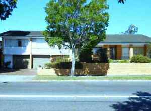 EXTRA Large Brick Family Home for Rent - Coorparoo - 4km to CBD Coorparoo Brisbane South East Preview