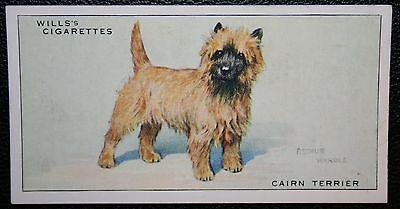 Cairn Terrier      Original 1930's Vintage Coloured Card # VGC