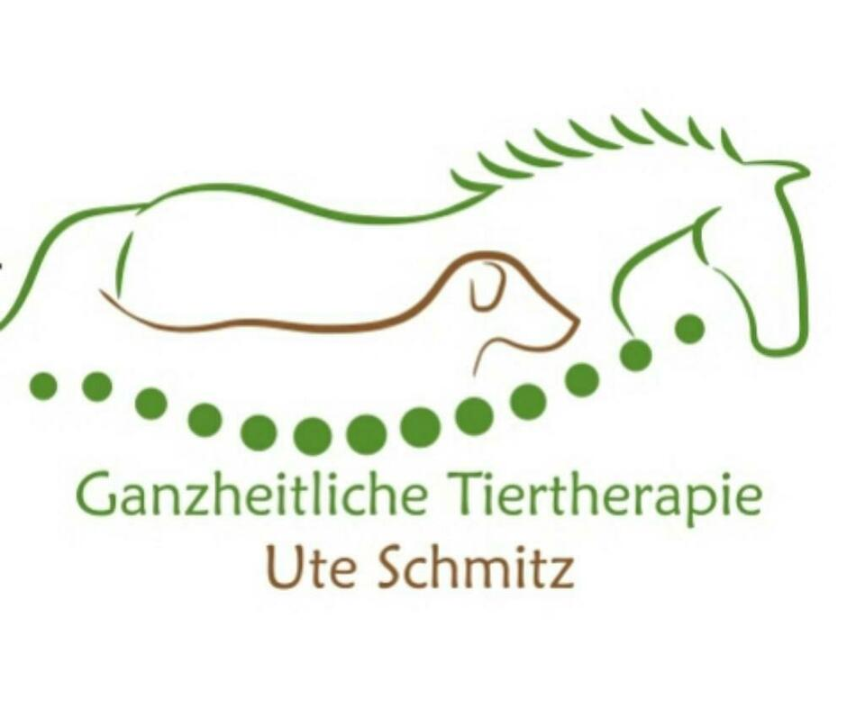 Physiotherapie für Pferde/ Pferdephysiotherapie in Halle