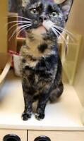 "Young Female Cat - Tortoiseshell: ""DeeDee"""