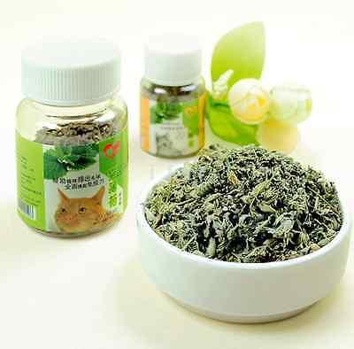 10g Organic Dried Catnip Nepeta cataria Leaf & Flower Herb Choose Bulk US