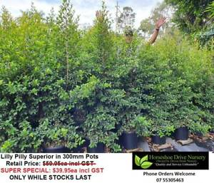 Need Plants? Order By Phone or Email!  Pickup No Contact or Freight Mudgeeraba Gold Coast South Preview