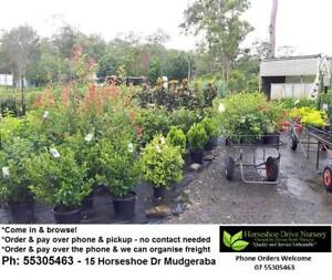 HUGE RANGE OF PLANTS - Contactless Pickup or Freight Available Mudgeeraba Gold Coast South Preview