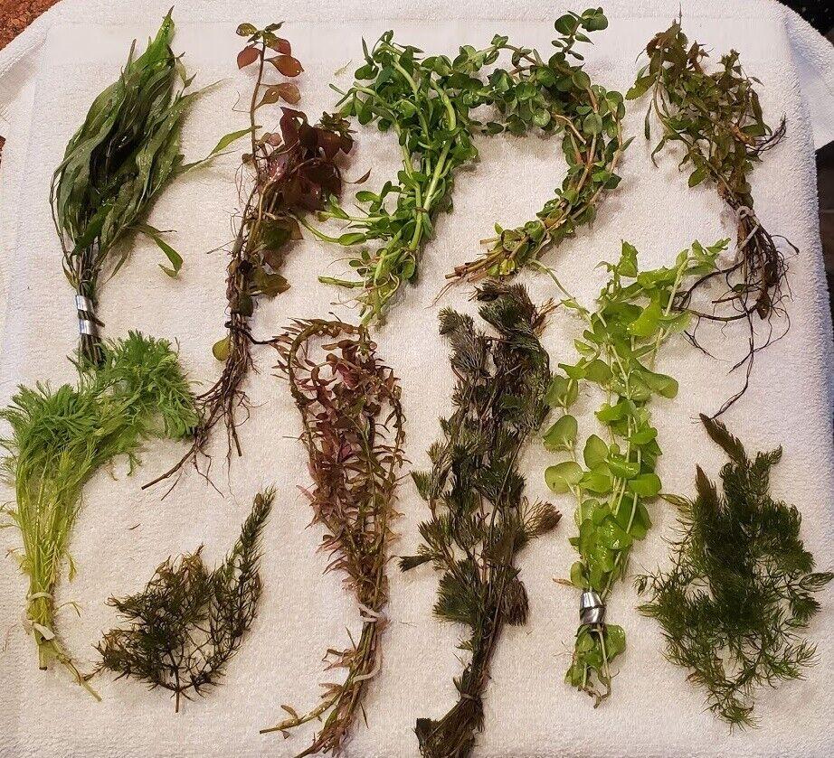 10 DIFFERENT SPECIES 50+ stems FULL 30g planted tank easy beginner aquarium 1