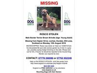 border terrier stolen from dundee, Rosco needs to come home please