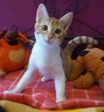 *****CATS IN CRISIS***** Tues - Fri 10am - 2pm MALAGA Malaga Swan Area Preview