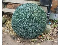 Large topiary garden balls £10 the pair