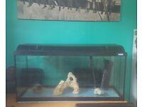 3ft Fluval tank ( Tropical aquarium )