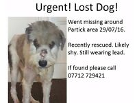 Lost Dog Today Around Partick