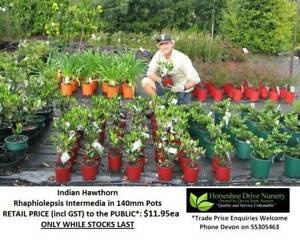 Superb Landscaping Plants - Priced From $11.95 Can Deliver Mudgeeraba Gold Coast South Preview