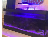 Marine tank with light and live rock