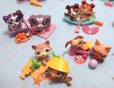Littlest Pet Shop Lot 5 RANDOM Pcs (2 Puppy Dogs + 3 Accessories) SURPRISE GIFT