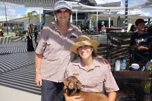 Registered Miniature Goats - Tame and Healthy from Petting Farm Yandina Maroochydore Area Preview