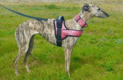 Dog walking Harness - non choke padded harness!