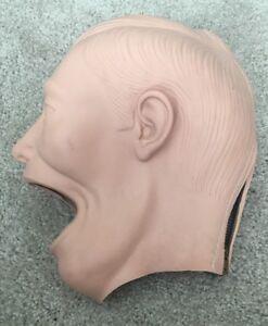 Dental Manikin Shroud Adult Dentoform