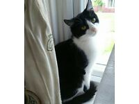 ***FREE TO GOOD HOME*** FEMALE NEUTERED BLACK AND WHITE CAT