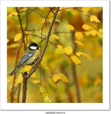 Chickadee Bird Art Print Home Decor Wall Art Poster - I](Animal Print Decor)