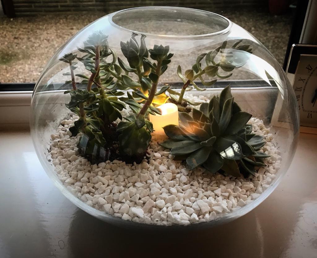 Fishbowl Garden (indoor)