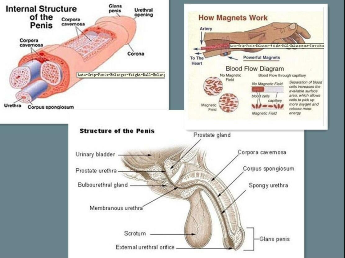Reproductive system structure infographic