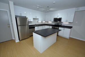 Newly Renovated 1 Bedroom in Great South End Location!
