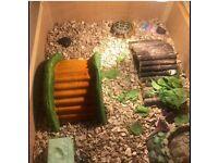Tortoise, box and heat lamp