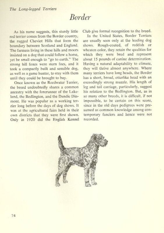 "The Border Terrier - Vintage Dog Art Print - Matted ""G"""