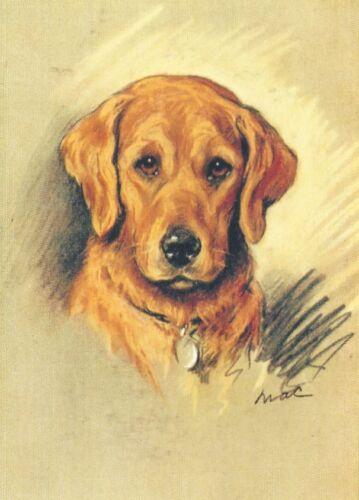 Golden Retriever - MATTED Dog Print - Lucy Dawson NEW