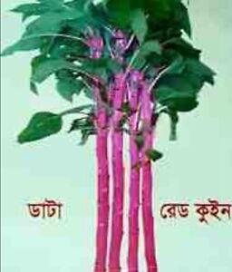 Bangladeshi Data/Denga - Amaranth (100% High & Best Quality Seeds)