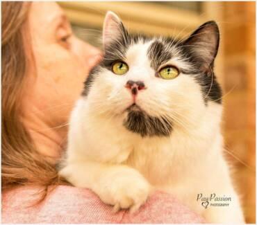 AK1357 : Quinn - CAT for ADOPTION - Vet Work Included