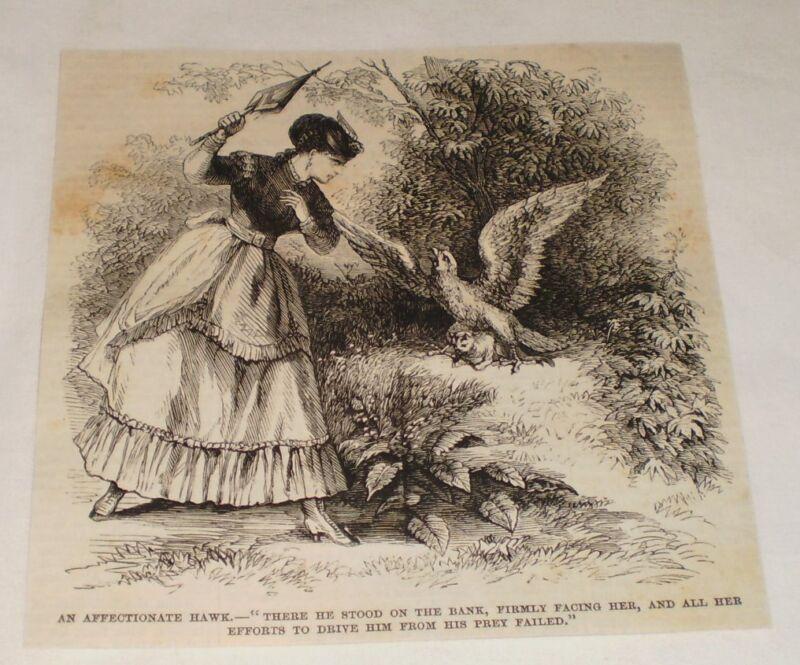 1870 magazine engraving ~ AN AFFECTIONATE HAWK