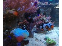 Free help to set up new marine aquarium