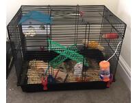 Hamster for sale!!
