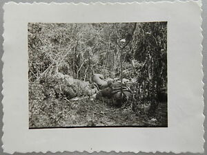 WWII ORIGINAL GERMAN WAR PHOTO KIA / DEAD SOLDIERS AFTER THE BATTLE