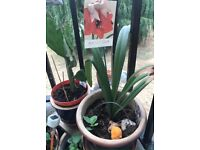 House Plants for outdoors