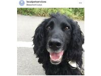 Dog Walker Leicester - Local Pet Services