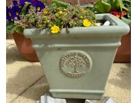 Heritage Garden Pottery Square Plant Pot with Pretty Yellow Alpine Plant