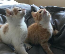 kittens .