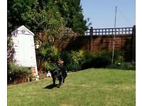 Dog Walking in Swadlincote