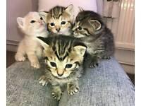 Cute little kittens for sale