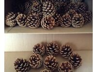 Pine Cones x 100. New season, dried naturally. From private, pet free garden.
