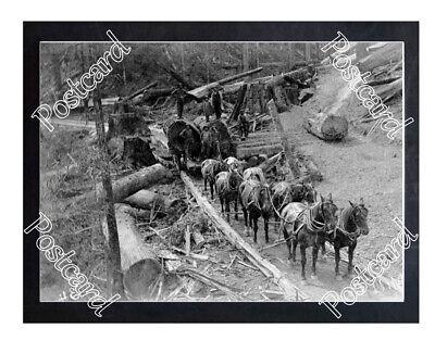 Historic Newberg Mill Co. - Newburg, California Train Postcard