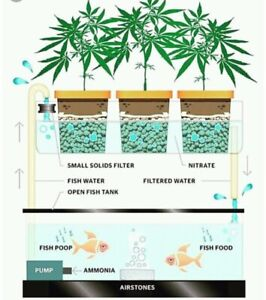 Organic Aquaponic Growup system for your Cannabis!