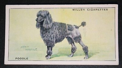 POODLE    Original Vintage 1930's Colour Card # VGC
